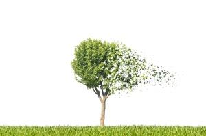 arbre automne dispersion désintégration particule feuille